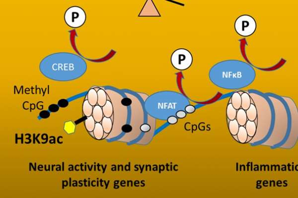synaptic genes and neural activity